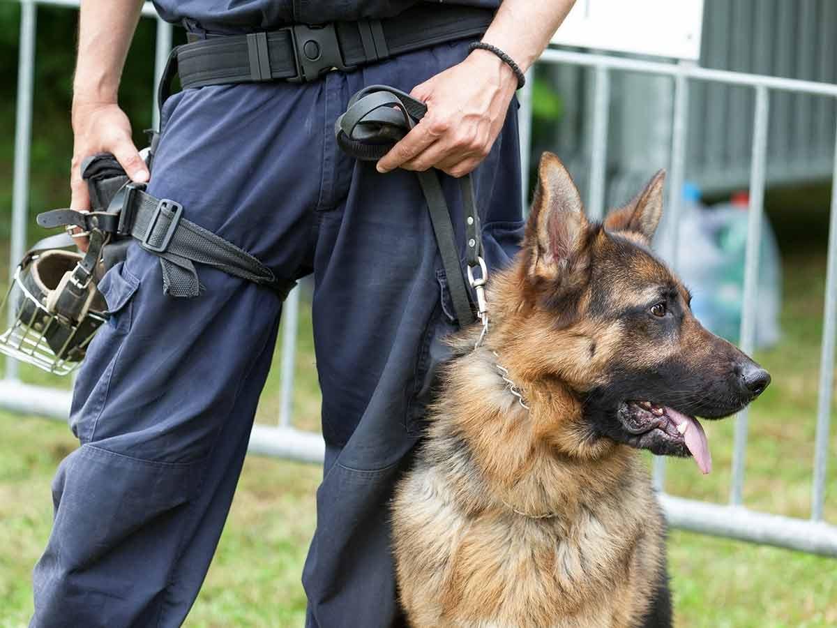 Wachhund und Hundeführer Berlin